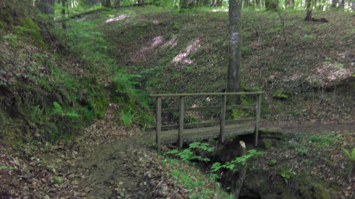 Emakume bat zauritua Bertizko Natur Parkean, paseatzen ari zela zuhaitz bat gainera erorita