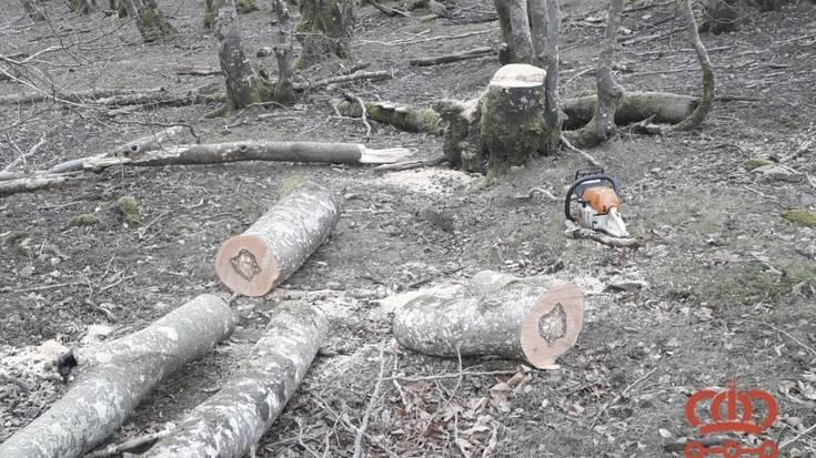 Bertizko Natura-Parkeko dermioetan pagoak mozten harrapatu dute pertsona bat