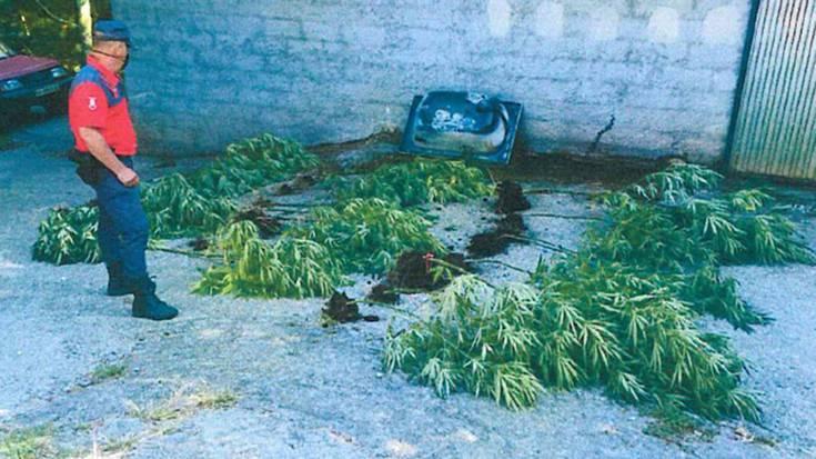 53 urteko lesakar bat atxilotu dute droga trafikoa leporatuta
