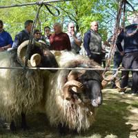 Udaberriko feria apirilaren 26an eginen dute Elizondon
