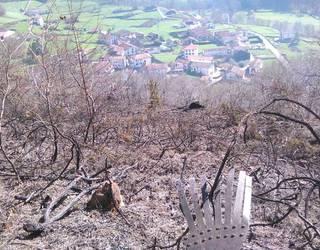 Sute batek haritzekin oihanberritutako mendia erre du Mendaur aldean