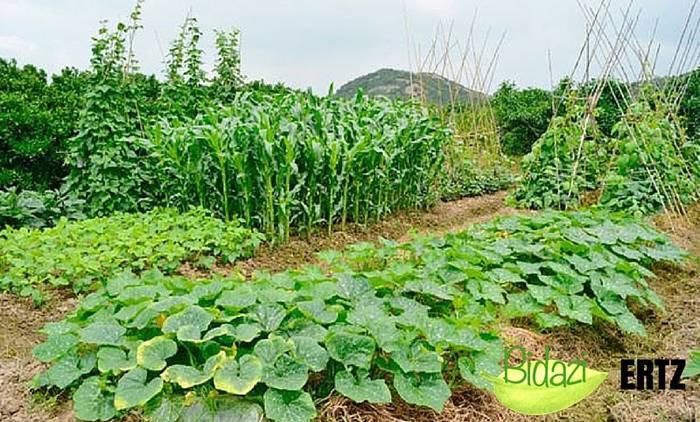 Bidazik baratze ekologikoari buruzko hitzaldia antolatu du Lesakan urriaren 23an