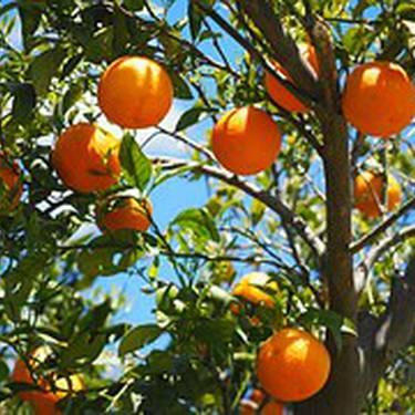 Fruta-arbolak